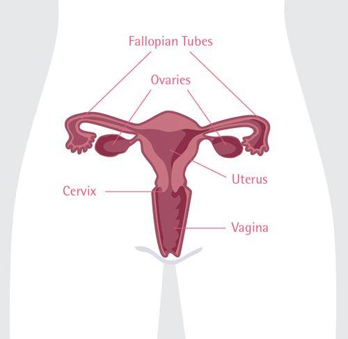 Nguyên nhân gây ung thư buồng trứng chị em nên biết