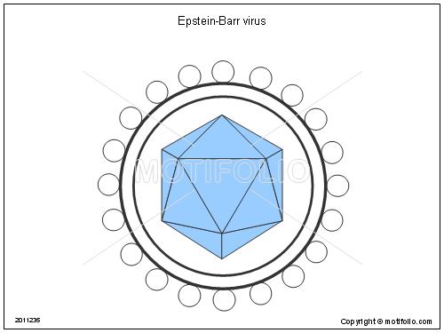 Virus Epstein-Barr cũng có thể là yếu tố nguy cơ gây bệnh