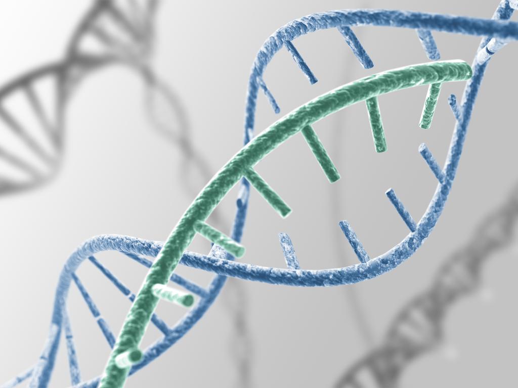 Bệnh bạch cầu có di truyền không?