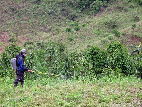 Thuốc diệt cỏ được cho là làm tăng nguy cơ nhiều bệnh ung thư