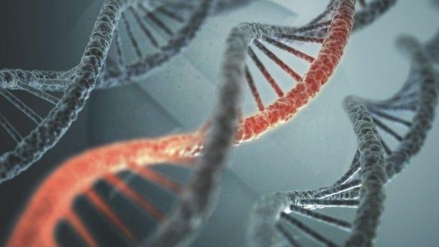Khoảng 1 trong 3 trường hợp u nguyên bào võng mạc được gây ra bởi một đột biến trong gen RB1.