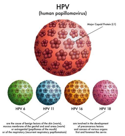 HPV có lây không?