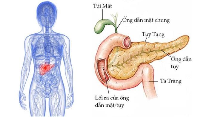 đau bụng trên rốn là bệnh gì 5