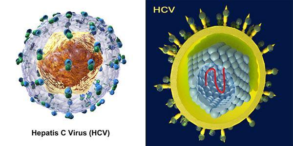 Viêm gan siêu vi C là do virut viêm gan C gây ra với tỷ lệ nhiễm bệnh khoảng 5%
