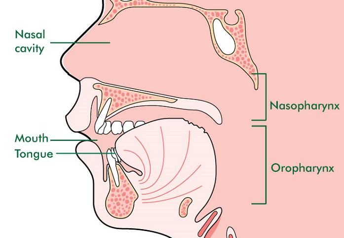 Ai nên khám tầm soát ung thư vòm họng